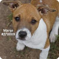 Adopt A Pet :: MARGO - Conroe, TX