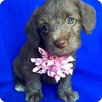Adopt A Pet :: Gazelle - Irvine, CA