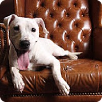 Pit Bull Terrier Mix Puppy for adoption in Carlisle, Tennessee - Lily