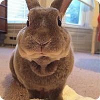 Adopt A Pet :: Oakland - Conshohocken, PA