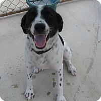 Adopt A Pet :: Bianca - Charlemont, MA