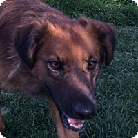 Adopt A Pet :: Daphnie - Buffalo, WY