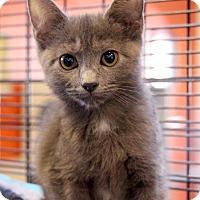 Adopt A Pet :: Susan - Sarasota, FL