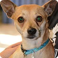 Adopt A Pet :: Sultan - Lafayette, IN