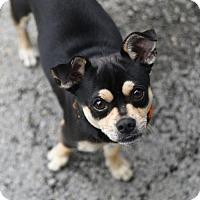 Adopt A Pet :: St. Mark - Chattanooga, TN