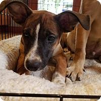 Adopt A Pet :: Cake - B - Simsbury, CT