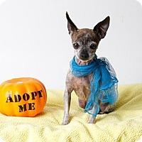 Adopt A Pet :: *SHILA - Sacramento, CA