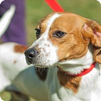 Adopt A Pet :: Avery - Cincinnati, OH