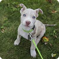 Adopt A Pet :: Panzer - Dayton, OH