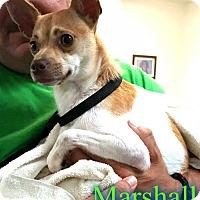 Adopt A Pet :: Marshall - Pensacola, FL