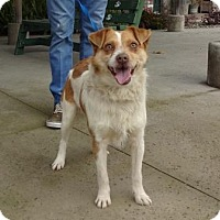 Adopt A Pet :: Teddy - Lathrop, CA