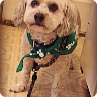 Adopt A Pet :: Baxter - Holly Springs, MS