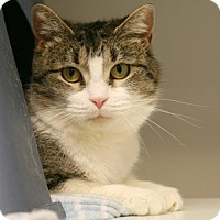 Adopt A Pet :: Silverado - Salt Lake City, UT