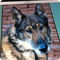 Adopt A Pet :: MASON VON MARSBERG - Los Angeles, CA