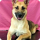 Adopt A Pet :: Sam (Westhampton)