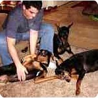 Adopt A Pet :: Sarge - New Richmond, OH