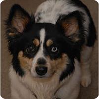 Adopt A Pet :: Oreo - Murfreesboro, TN