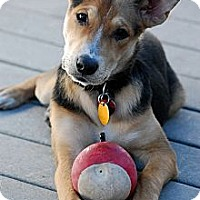 Adopt A Pet :: Penny - Torrance, CA