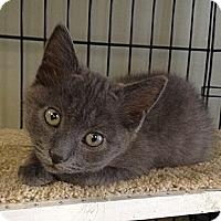Adopt A Pet :: Buddy - Island Park, NY