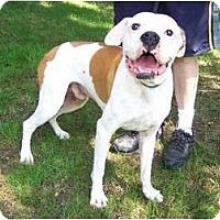 Adopt A Pet :: Buster - ARDEN, NC
