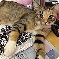 Adopt A Pet :: Francesca - Island Park, NY