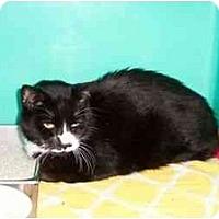 Adopt A Pet :: Fonzie - Secaucus, NJ