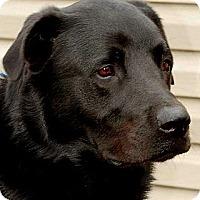Adopt A Pet :: DECLAN(SMART-TRAINED!! WOW! - Wakefield, RI