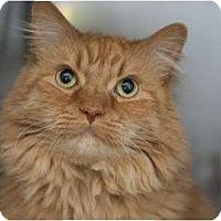Adopt A Pet :: Cabernet - Columbus, OH