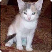 Adopt A Pet :: Liz--adopted! - New Richmond, OH