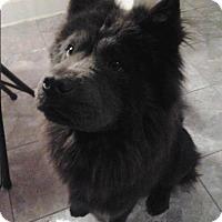 Adopt A Pet :: SERAPHINA - Dix Hills, NY