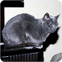 Photo 3 - Domestic Shorthair Cat for adoption in Whitewater, Wisconsin - Dancer