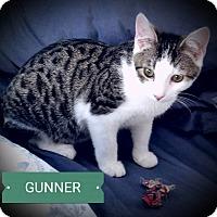 Adopt A Pet :: Gunner - Fairborn, OH