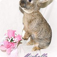 Adopt A Pet :: Michelle - Elizabethtown, KY
