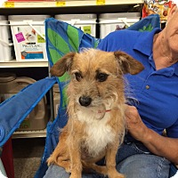 Adopt A Pet :: Thatcher - Hohenwald, TN