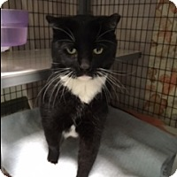 Adopt A Pet :: Moochie - Diamond Springs, CA