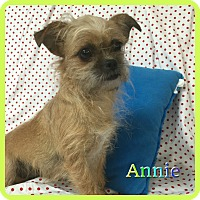 Adopt A Pet :: Annie - Hollywood, FL