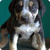 Adopt A Pet :: Romeo - Waldorf, MD
