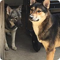 Adopt A Pet :: Francine & Johnny - Matawan, NJ