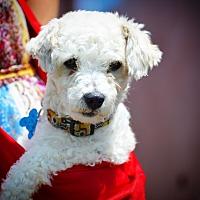 Adopt A Pet :: Marley-ADOPT Me! - Redondo Beach, CA