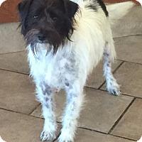 Adopt A Pet :: Leo - Oswego, IL