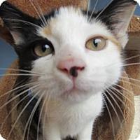 Adopt A Pet :: Tiana - Northfield, MN