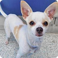 Adopt A Pet :: Mona - Long Beach, CA