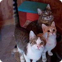 Adopt A Pet :: Jack - Monterey, VA