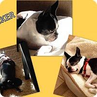 Adopt A Pet :: Tucker-Adopted - Huntington Beach, CA