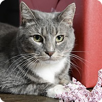 Adopt A Pet :: Link - Whitehall, PA