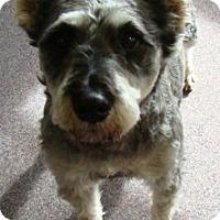 Adopt A Pet :: Jedi - Rosalia, KS