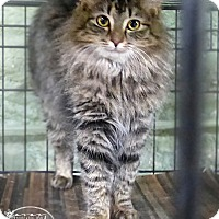 Adopt A Pet :: Taylor - Marlinton, WV