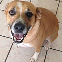 Adopt A Pet :: Scooby - Palm Bay, FL