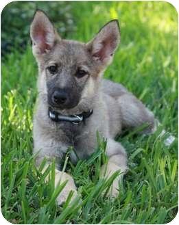 Adopt A Dog Largo Fl