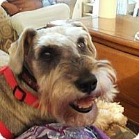 Adopt A Pet :: Marta - Hilliard, OH